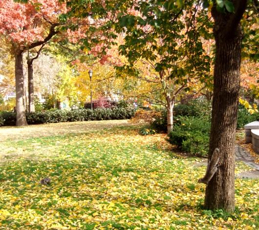 紅葉のニューヨーク、野生のリスくんたちは大忙し_b0007805_9213048.jpg