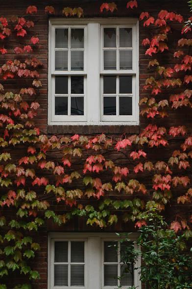 蔦の窓_d0094105_18286.jpg