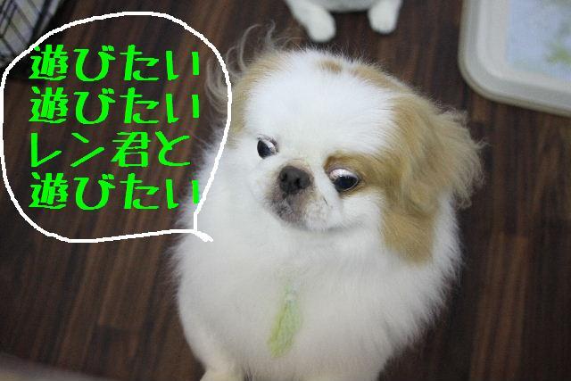 嬉しいサプライズ♪_b0130018_1644482.jpg