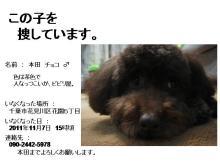 【拡散希望/迷子犬】花見川区で迷子のチョコ君お家に帰れました!_d0170430_6162216.jpg