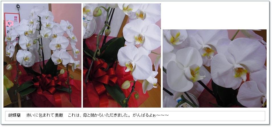 d0157235_20151219.jpg