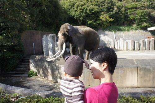 初動物園_e0142956_15354860.jpg