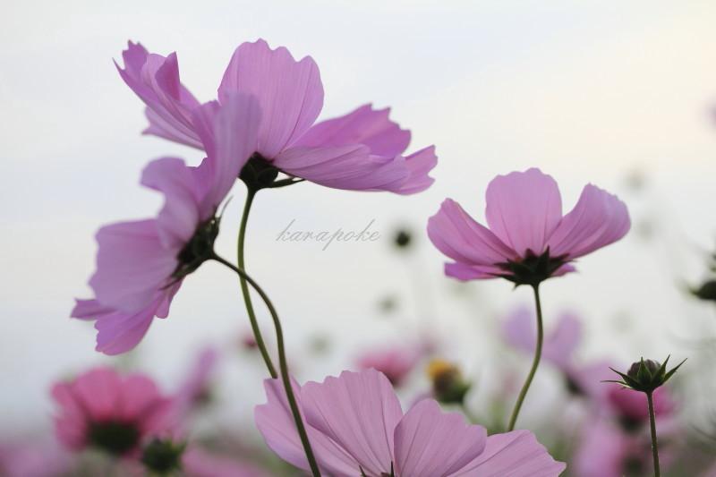 b0091180_2011514.jpg