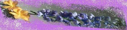 e0204483_1205273.jpg