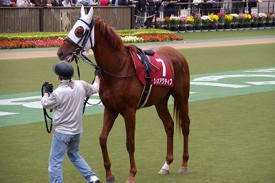 京王杯2歳Sは、アドマイヤムーン産駒レオアクティブが父譲りの末脚で快勝!_b0015386_2039520.jpg