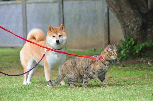 やっぱり猫は・・・_a0126590_8412861.jpg