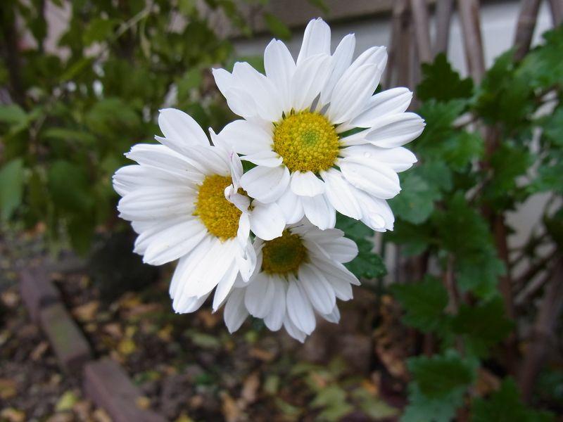 寒さに負けない花たち_c0025115_22121016.jpg