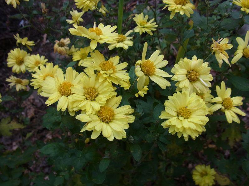 寒さに負けない花たち_c0025115_22121374.jpg