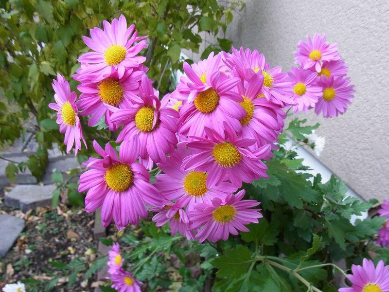 寒さに負けない花たち_c0025115_22121770.jpg