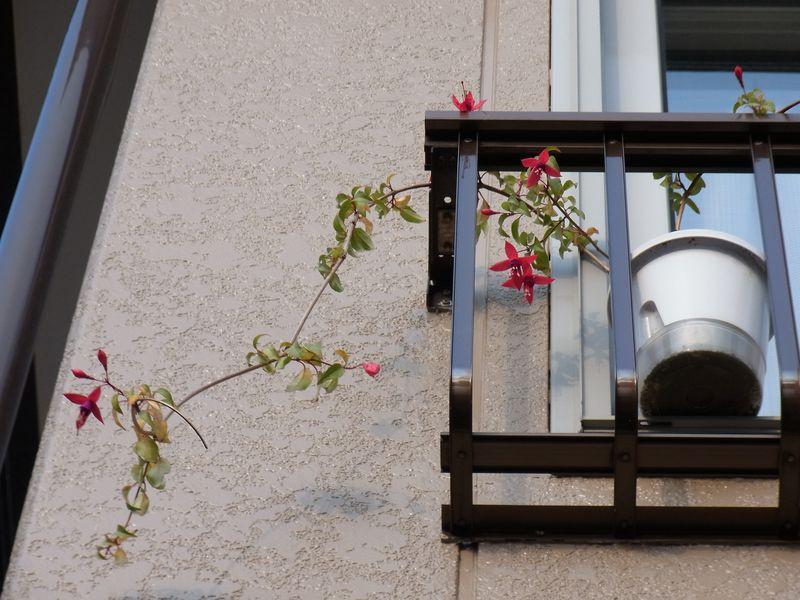 寒さに負けない花たち_c0025115_2212327.jpg