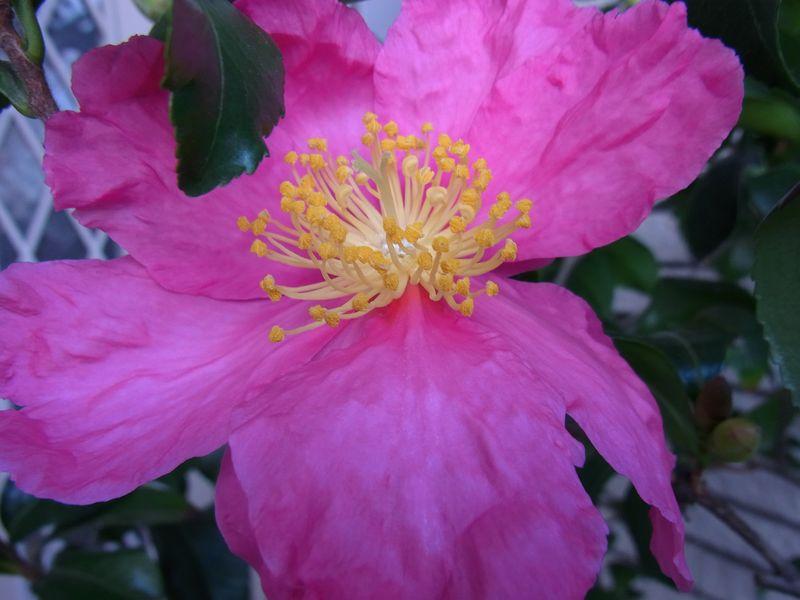 寒さに負けない花たち_c0025115_22124338.jpg