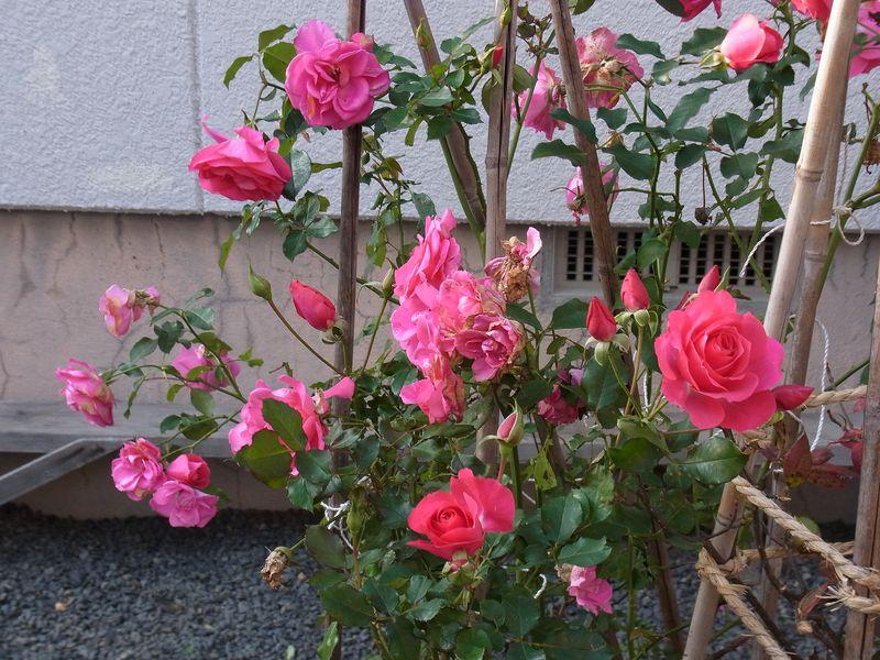 寒さに負けない花たち_c0025115_2212522.jpg