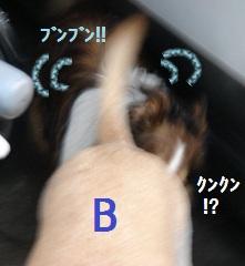 b0226221_9402938.jpg