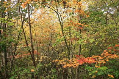 東山ふれあいの森ハイキング&樹木観察_d0055236_23223255.jpg