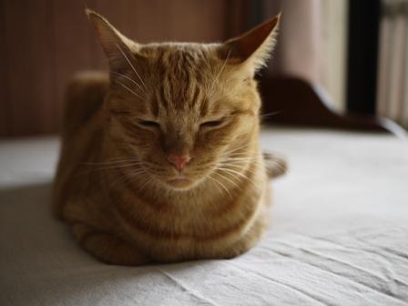 香箱猫 しぇる編。_a0143140_2322132.jpg