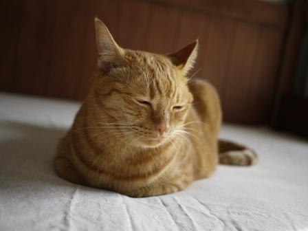 香箱猫 しぇる編。_a0143140_2343637.jpg