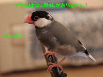 b0158061_21192679.jpg