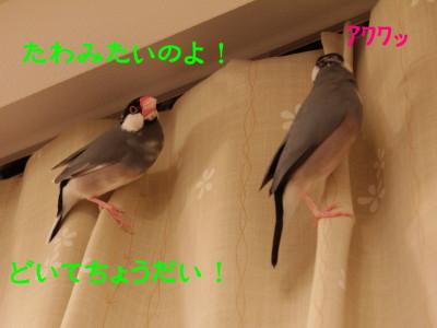 b0158061_21193651.jpg