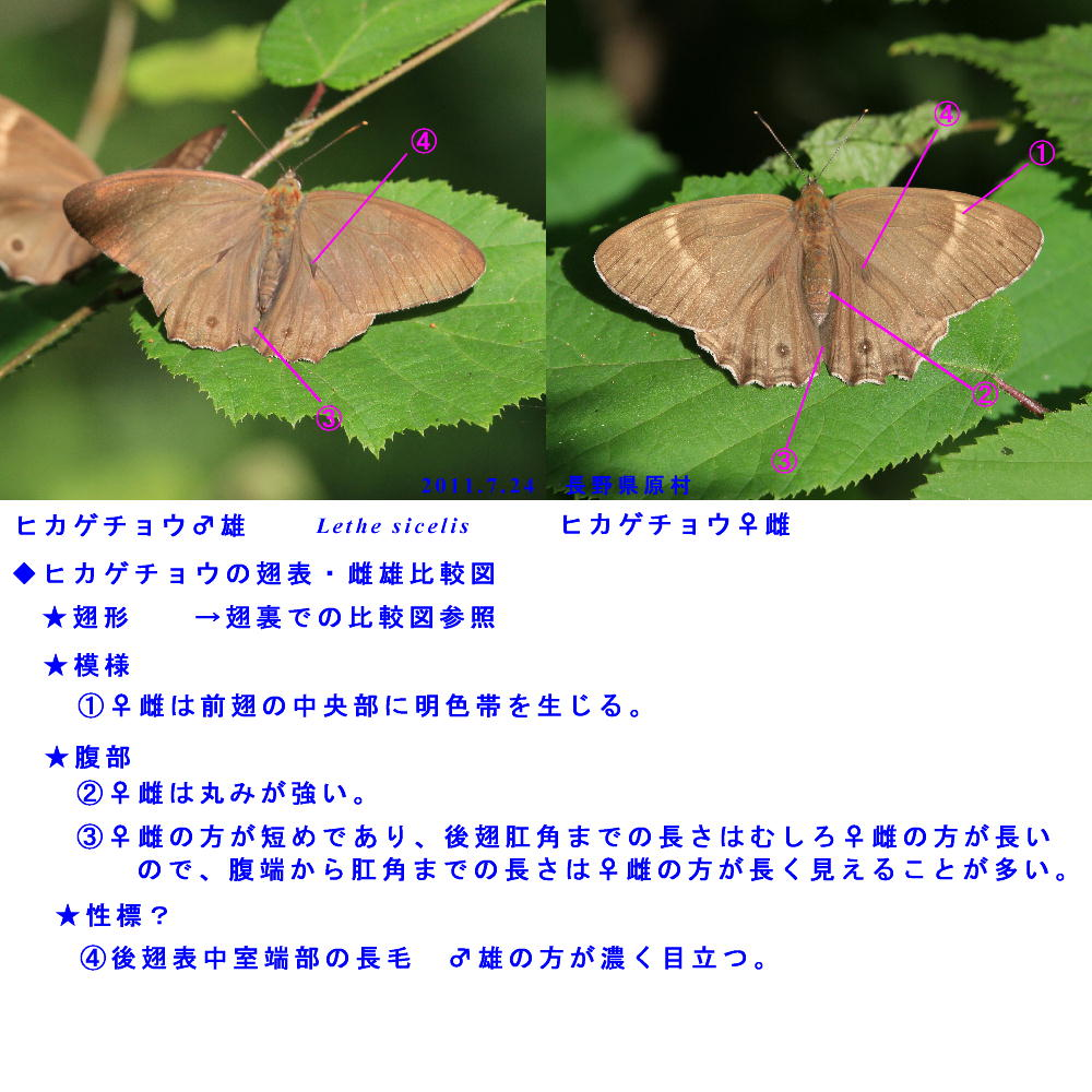 a0146869_0201352.jpg