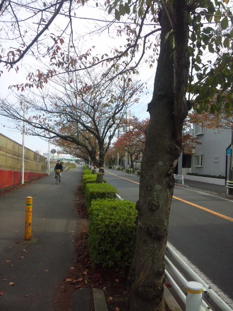 桜の移植_c0172504_1353915.jpg