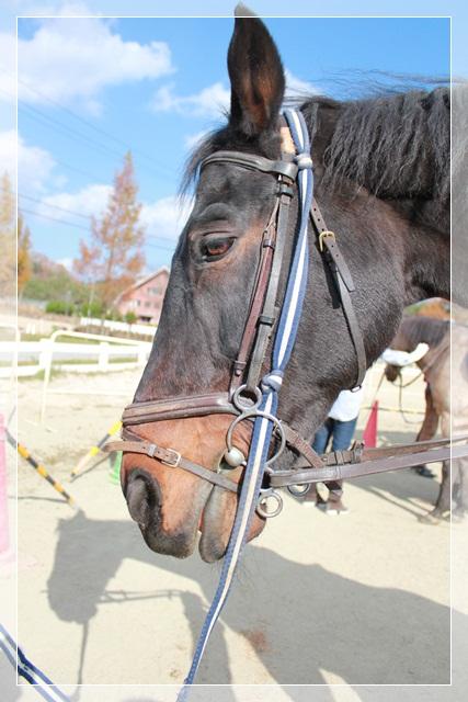 乗馬体験(^_-)-☆_a0213806_21235760.jpg
