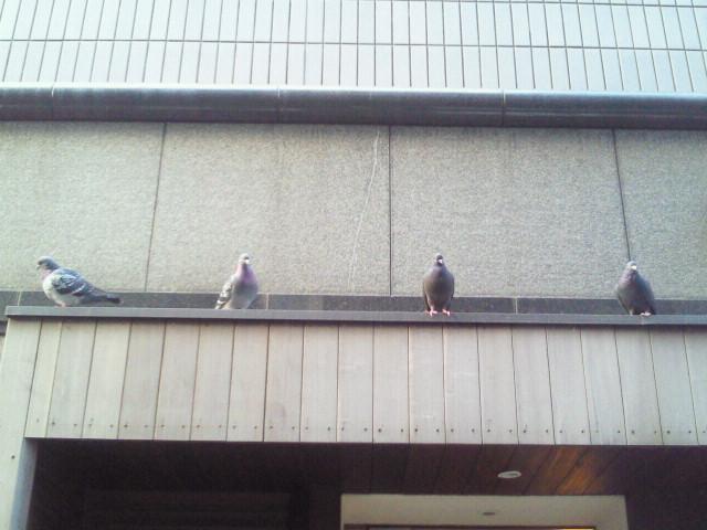 ホントにしつこいですが、今日は赤坂ローズイーに是非!_f0178313_14261322.jpg