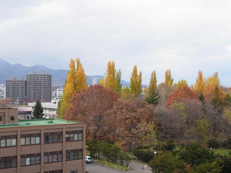 今年はポプラの黄葉がきれい_c0025115_18222155.jpg