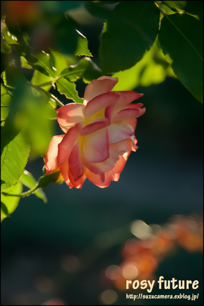 バラ色の人生_f0100215_2240594.jpg