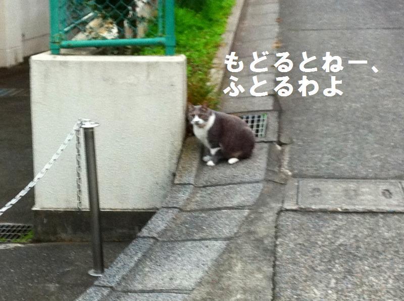 a0147921_1849147.jpg
