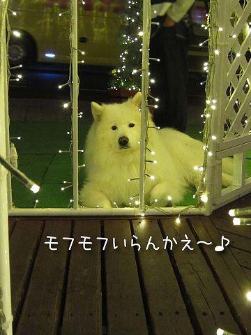 続・おっきなキラキラ_c0062832_3481435.jpg