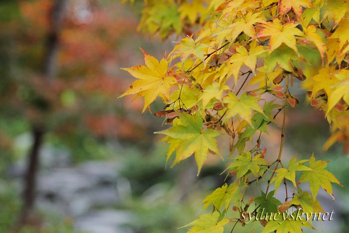 秋色・イロイロ (2)_f0084337_23524235.jpg