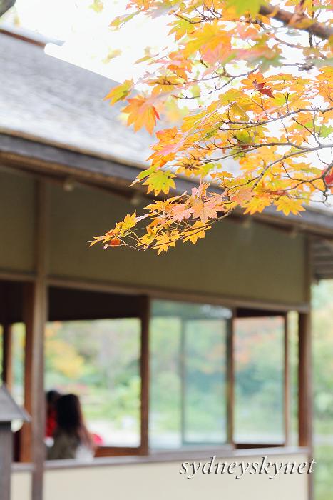 秋色・イロイロ (2)_f0084337_23525055.jpg