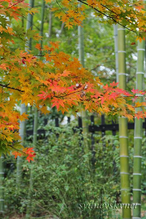 秋色・イロイロ (2)_f0084337_23533421.jpg