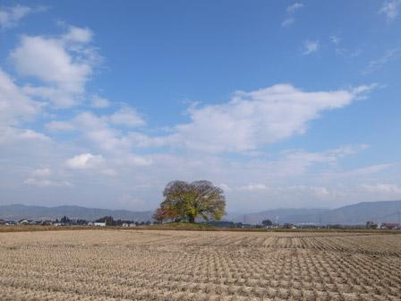 キホンの木_a0014840_1925159.jpg
