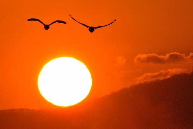 夕陽に白鳥 月に菱食。_b0165760_2074523.jpg