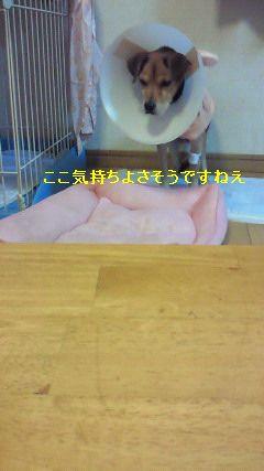 f0192863_15245430.jpg