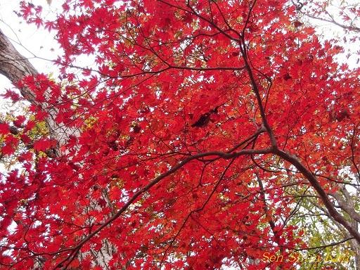 京都 八丁平の秋 2011年_a0164068_1558969.jpg