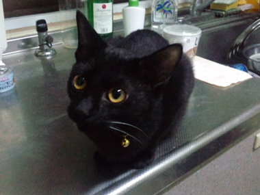 【黒組】 黒猫は様になる_a0066779_7183717.jpg