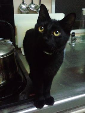 【黒組】 黒猫は様になる_a0066779_7184139.jpg