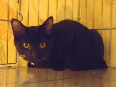 【黒組】 黒猫は様になる_a0066779_7185413.jpg