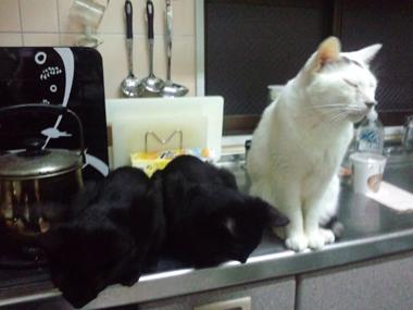 【黒組】 黒猫は様になる_a0066779_7272041.jpg