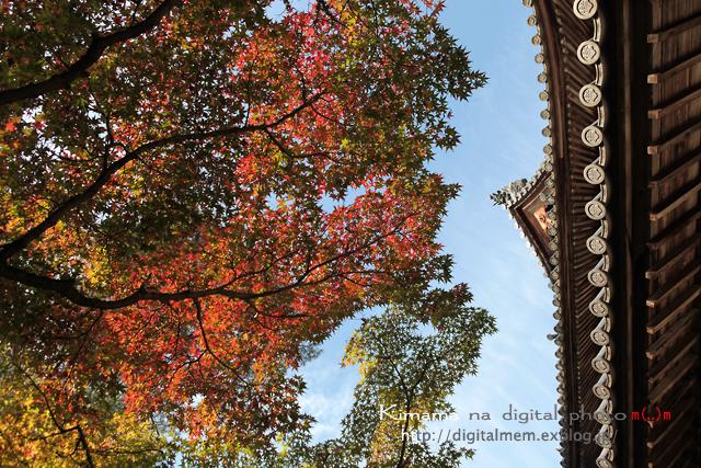 宝福寺の紅葉 11/13_c0083985_21102915.jpg