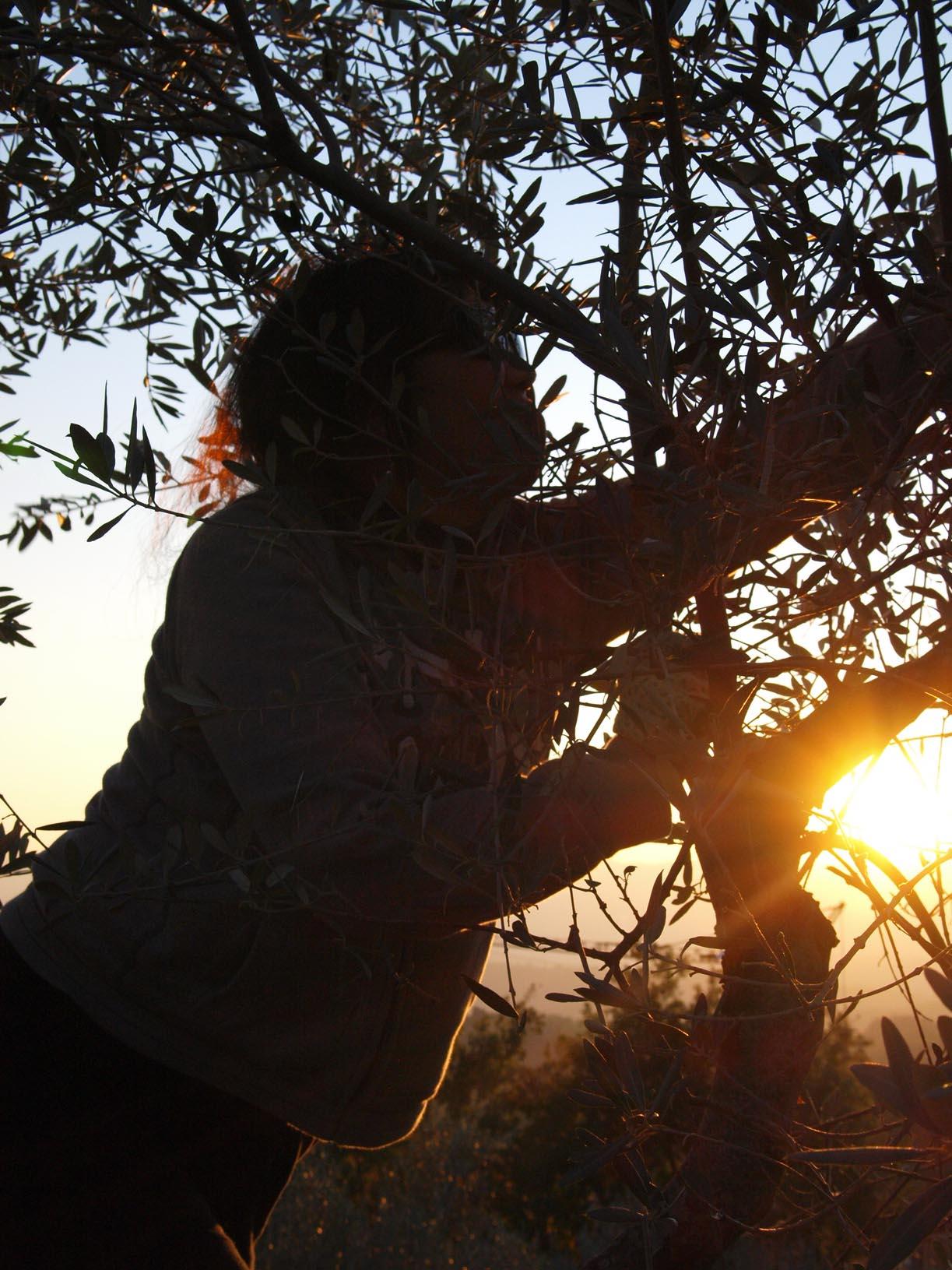 オリーブ狩り2011!!!!!_c0179785_310506.jpg
