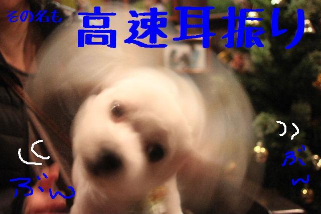 b0130018_107327.jpg