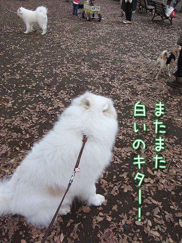 日曜おっきな公園_c0062832_432171.jpg