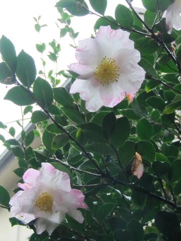 喫茶カモシカスペシャル _f0082141_12534271.jpg
