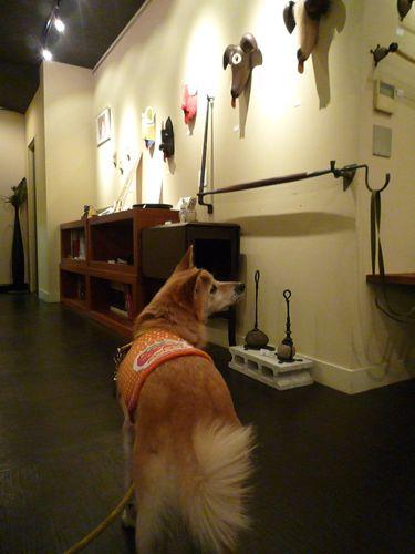 Dog de Art展 始まってます。_f0060262_2122124.jpg