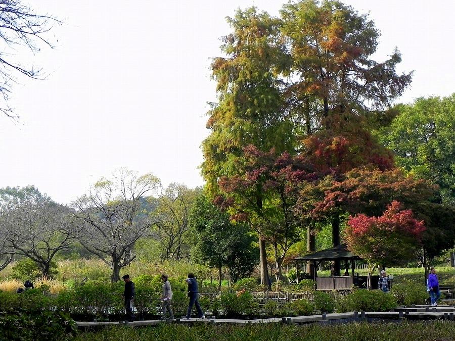 円山公園②_c0187781_92686.jpg