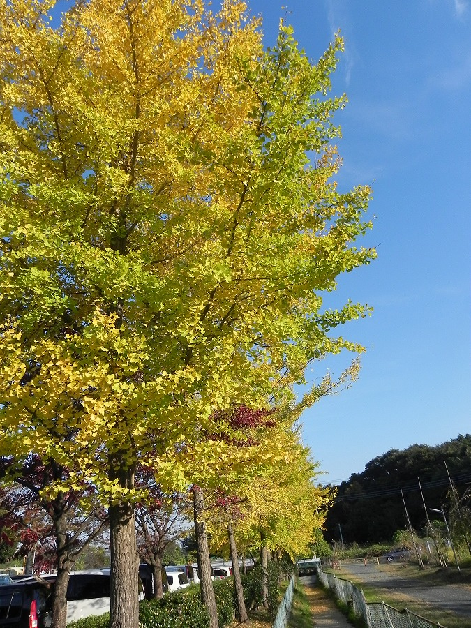 円山公園②_c0187781_9351398.jpg