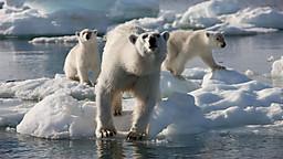 Frozen Planet (凍った地球(星))_c0027188_4195466.jpg